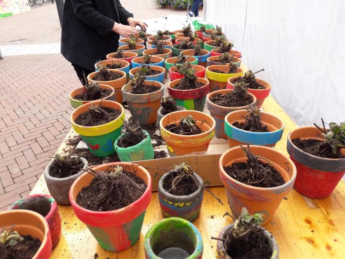 Kinderen planten eigen aardbeienplantje!