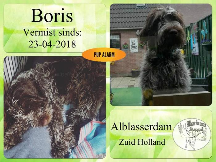 Hond (puppy van 5 maanden) kwijt